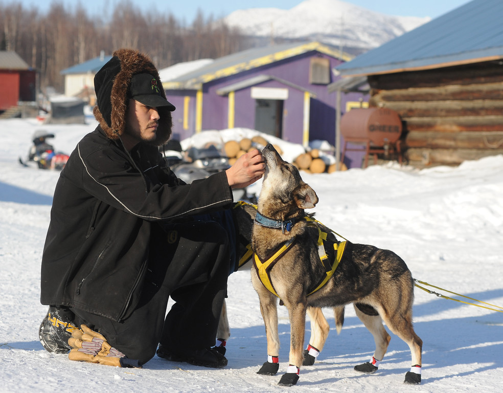 . Frederick Huntington visits with one of Hans Gatt\'s dogs after he arrived into the Yukon River village of Kaltag during the 2014 Iditarod Trail Sled Dog Race on Saturday, March 8, 2014. (AP Photo/The Anchorage Daily News, Bob Hallinen)