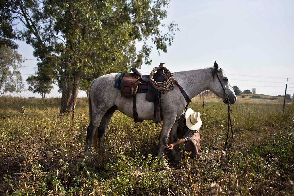 . Amit, an Israeli cowboy, treats his horse after working with cattle on a ranch just outside Moshav Yonatan, a collective farming community, about 2 km (1 mile) south of the ceasefire line between Israel and Syria in the Golan Heights May 2, 2013. Cowboys, who have been running the ranch on the Golan\'s volcanic rocky plateau for some 35 years, also host the Israeli military, who use half of the cattle farm, 20,000 dunams (5,000 acres), as a live-fire training zone. Israel captured the Golan Heights from Syria in the 1967 Middle East war and annexed the territory in 1981, a move not recognized internationally. Picture taken May 2, 2013. REUTERS/Nir Elias