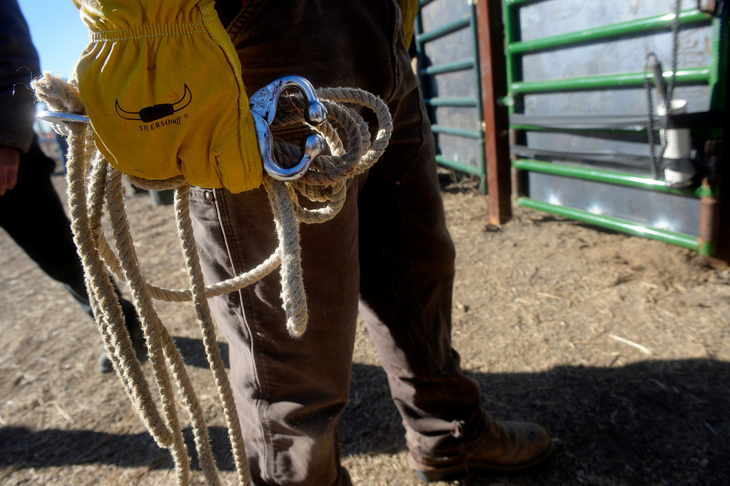. William Kutosky holds a pair of nose tongs during the annual bison  roundup at the Rocky Mountain Arsenal National Wildlife Refuge in Commerce City, CO December 17, 2013. (Photo By Craig F. Walker / The Denver Post)